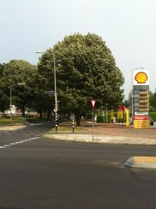 Lindeboom op  Grootstalselaan Nijmegen, ruikt overheerlijk