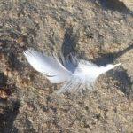 veertje, teken van de engelen