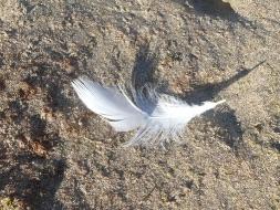 tekenen van de engelen